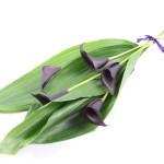 Cali Lily Bouquet