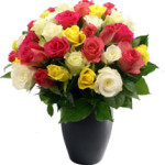 Rose Medley from £24.90