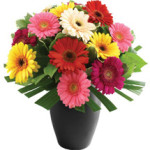 Simply Geberas from £29.90