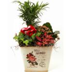 Valentines Plants